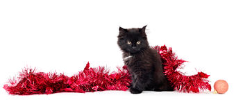 Kitty play with Christmas decorations. On white background Royalty Free Stock Images