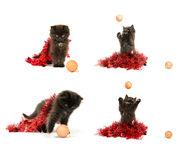 Kitty play with Christmas decorations. On white background Royalty Free Stock Photography