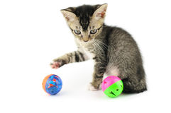 Kitty playing with balls Royalty Free Stock Photos