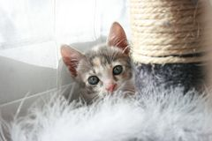 kitty playing royalty free stock images