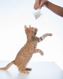 Kitty Playtime foto de archivo