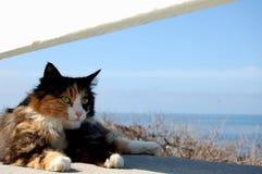 Kitty por el mar Foto de archivo