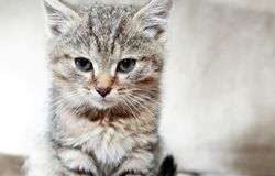 Kitty Portrait Closeup royalty free stock photography