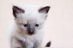 Kitty Portrait piacevole Fotografia Stock Libera da Diritti