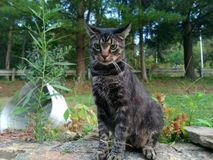 Kitty posant pour la photo dehors Photo stock