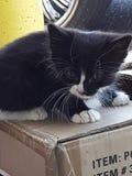 kitty stock foto's