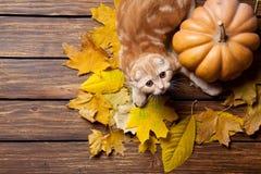 Kitty and pumpkin Royalty Free Stock Photos