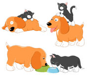 Kitty and puppy Royalty Free Stock Photography