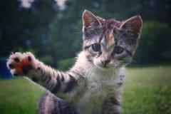 Kitty que agita imagen de archivo libre de regalías