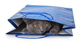 Kitty que mira a escondidas de bolso del regalo Fotografía de archivo libre de regalías