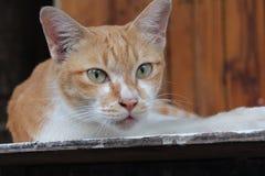 Kitty que mira la cámara foto de archivo