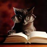 Kitty reading a book stock photos