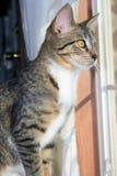Kitty regardant à l'extérieur un hublot. Photographie stock libre de droits