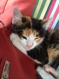 Kitty resting on bag. Brindle kitty asleep Royalty Free Stock Images