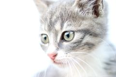 Kitty's face. On a white background Stock Photos