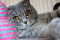Kitty's games Stock Photo