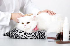 Kitty's veterinarian combing Stock Photos