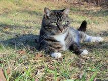 Kitty se reposant après jeu Photo stock