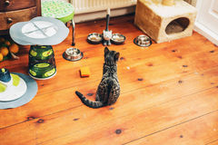 Kitty se reposant observant ses bols de nourriture Photos stock