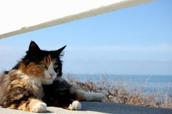 Kitty by the sea. Stray cat I found hanging out by the ocean in sunny southern California stock photo
