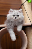 Kitty sitting on the cat house. Persian Kitty sitting on the cat house stock photos