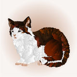 Kitty sitting vector. Kitty three color sitting pussy feline vector illustration Royalty Free Stock Photography