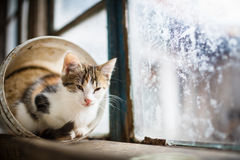Kitty sitting on a window Stock Images