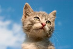 Kitty in the sky. Little cute kitten' s face Royalty Free Stock Photos
