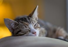 Kitty Sleeping él apagado imagen de archivo