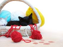 Kitty sleeping in the basket with yarn Royalty Free Stock Image