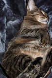 Kitty is sleeping. The cat in his fur bed. Kitty is sleeping Stock Photo