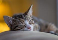 Kitty Sleeping det av Fotografering för Bildbyråer