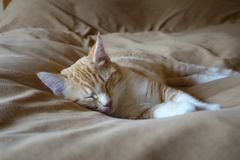 Kitty sleeping Stock Images