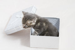 kitty, small kitten stuck in a gift box, cuddly animal sweet fac Stock Image