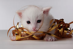 Kitty. A small kitten stuck in the serpentine Stock Image