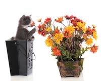 Kitty Sniffing Posies Stock Image