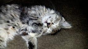 Kitty soñoliento Fotos de archivo libres de regalías