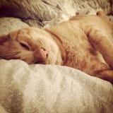 Kitty somnolent images libres de droits