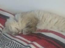 Kitty somnolent image libre de droits