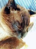 Kitty sonnolento immagini stock