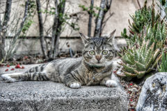 Kitty on stone Stock Photo