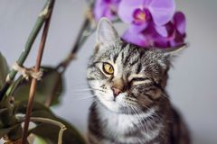 Kitty. striped gray cat. cat head. portrait. baleen face. Cat and orchids stock images
