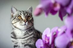 Kitty. striped gray cat. cat head. portrait. baleen face. Ncat and orchids stock photos