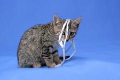 Kitty sur le fond bleu images libres de droits
