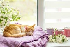 Kitty sur le rebord de fenêtre, tasses de cacao chaud Images libres de droits