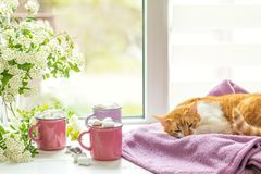 Kitty sur le rebord de fenêtre, tasses de cacao chaud Images stock