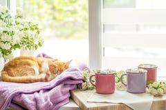 Kitty sur le rebord de fenêtre, tasses de cacao chaud Photo stock