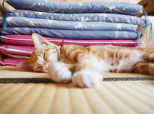 Kitty in the tatami room. Lovely cat lies on the tatami mat of a japanese style room Royalty Free Stock Photos