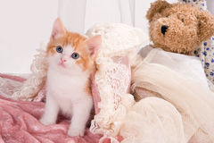 Kitty and Teddy. Six weeks old kitten with a teddy bear Stock Photo