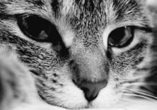 Kitty tellement sérieux photo stock